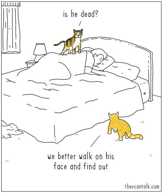 se gli animali parlassero