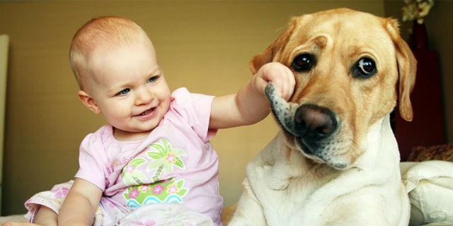 Cane e bambino sotto lo stesso tetto