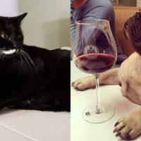 Brindisi e aperitivi tra amici… a quattro zampe! Dopo la birra, ecco il vino per cani e gatti