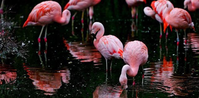 d0d45b61392bc Flamingo mania  il trend più colorato del momento - Roba da Donne