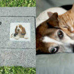 Sono i migliori amici dell'uomo e, come tali, ora gli animali possono essere sepolti vicino ai padroni