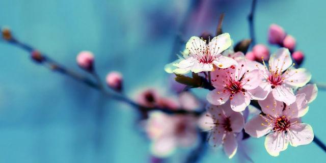 Equinozio di Primavera: perché era ieri e 5 rituali magici per godere dei suoi influssi