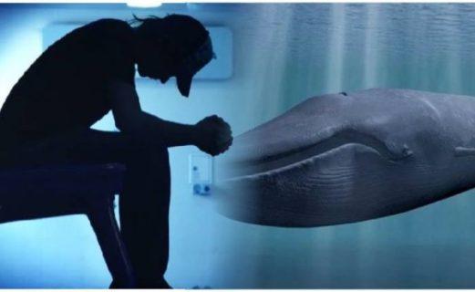 La Balena Felice e la Pink Whale contro Blue Whale, il gioco del suicidio social