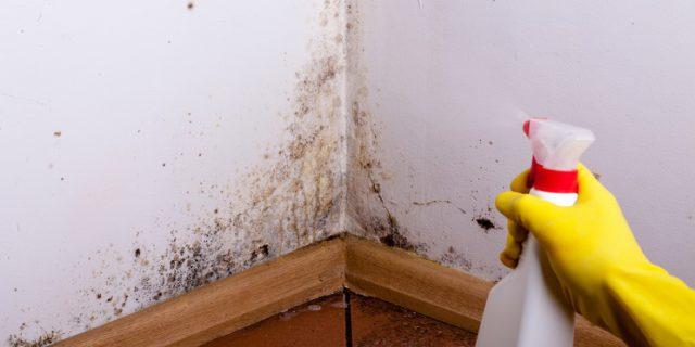 muffa come eliminarla dai muri
