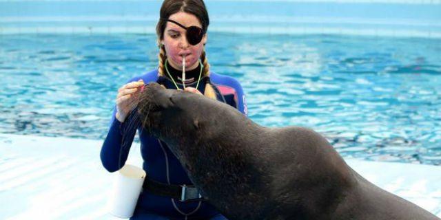 Gessica Notaro insultata per quel post sui leoni marini