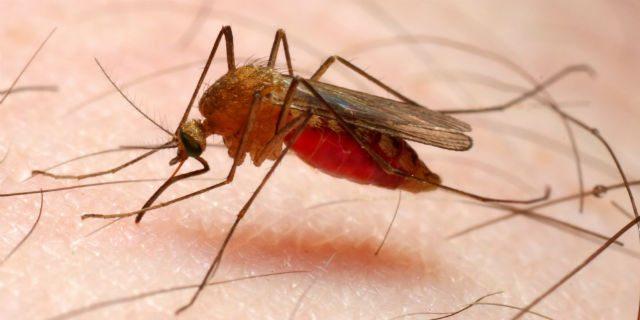 Bambina di 4 anni muore di malaria. Non era stata all'estero