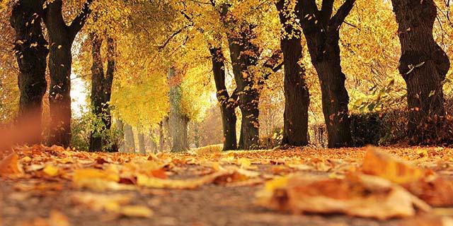 Foliage, posti da visitare che l'autunno rende magici