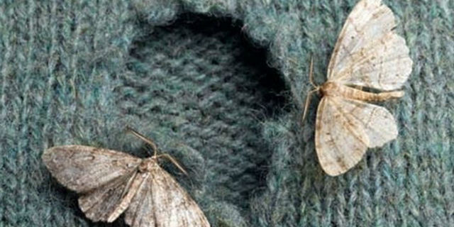 Tarme e tarli: 10 rimedi per eliminarli - Roba da Donne
