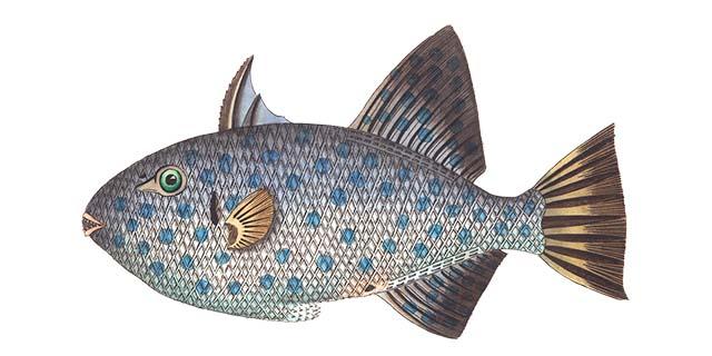 Storia del Pesce d'Aprile, com'è nato e cosa rappresenta oggi
