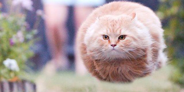 Perché i gatti ci piacciono tanto?