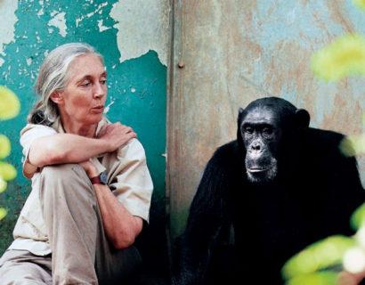 Jane Goodall: Cosa separa noi dagli scimpanzé?