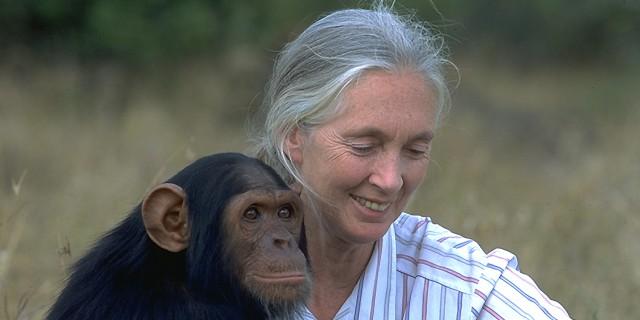 Jane Goodall: la straordinaria amica degli scimpanzé