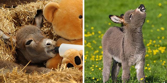 Gli asini sono i nuovi gattini: 25 immagini che fanno impazzire il web