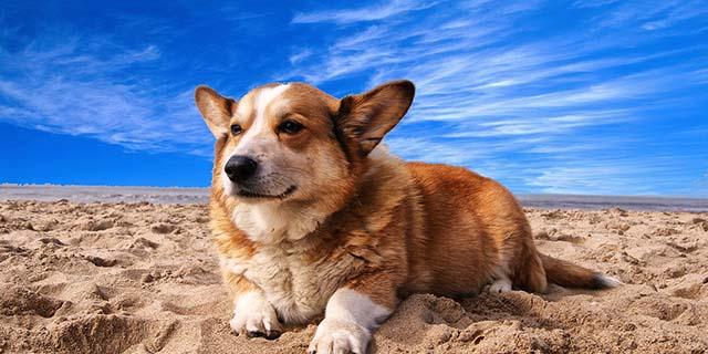 """Spiagge per cani 2018: """"Io qui posso entrare!"""""""