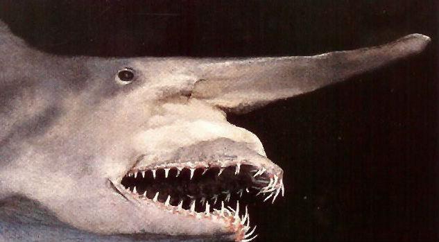 8 animali preistorici ancora esistenti