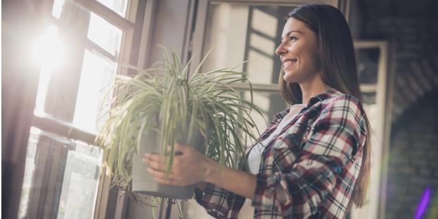 Piante da interno: le migliori e come prendersene cura