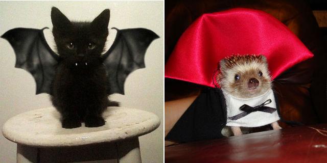 23 costumi di Halloween terribilmente carini per i nostri 4 zampe