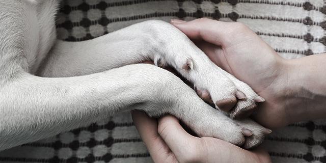Una veterinaria racconta cosa fanno tutti gli animali prima di morire
