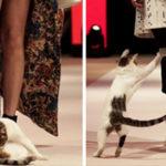 """Per la serie """"sfilate di moda contro gli stereotipi"""", sfila il gatto randagio"""