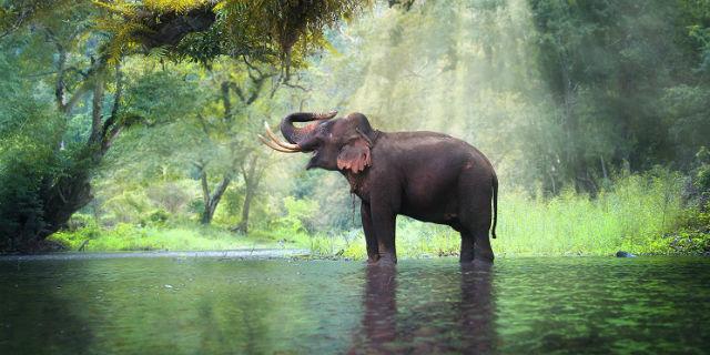 Portafortuna elefante