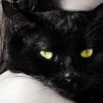 Qual è il prezzo della folle superstizione del gatto nero che porta sfortuna