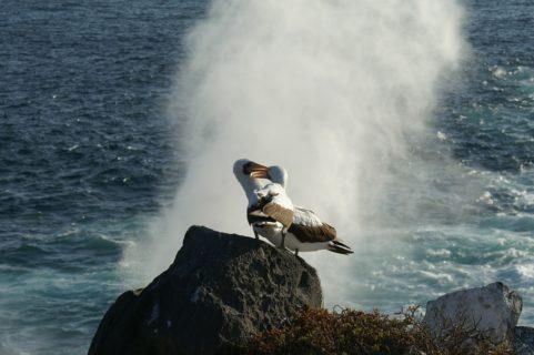 Storia vera di Sphen e Magic, due pinguini gay