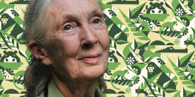 """Jane Goodall: """"La finestra si sta chiudendo. Il mondo sta diventando un inferno"""""""