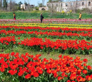 Fare un viaggio in Olanda, restando in Italia: 12 immagini del TuliPark