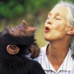 Cosa può insegnarci Jane Goodall dopo 40 anni vissuti tra gli scimpanzé