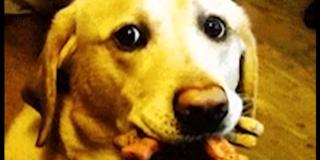 Cane e biscotti
