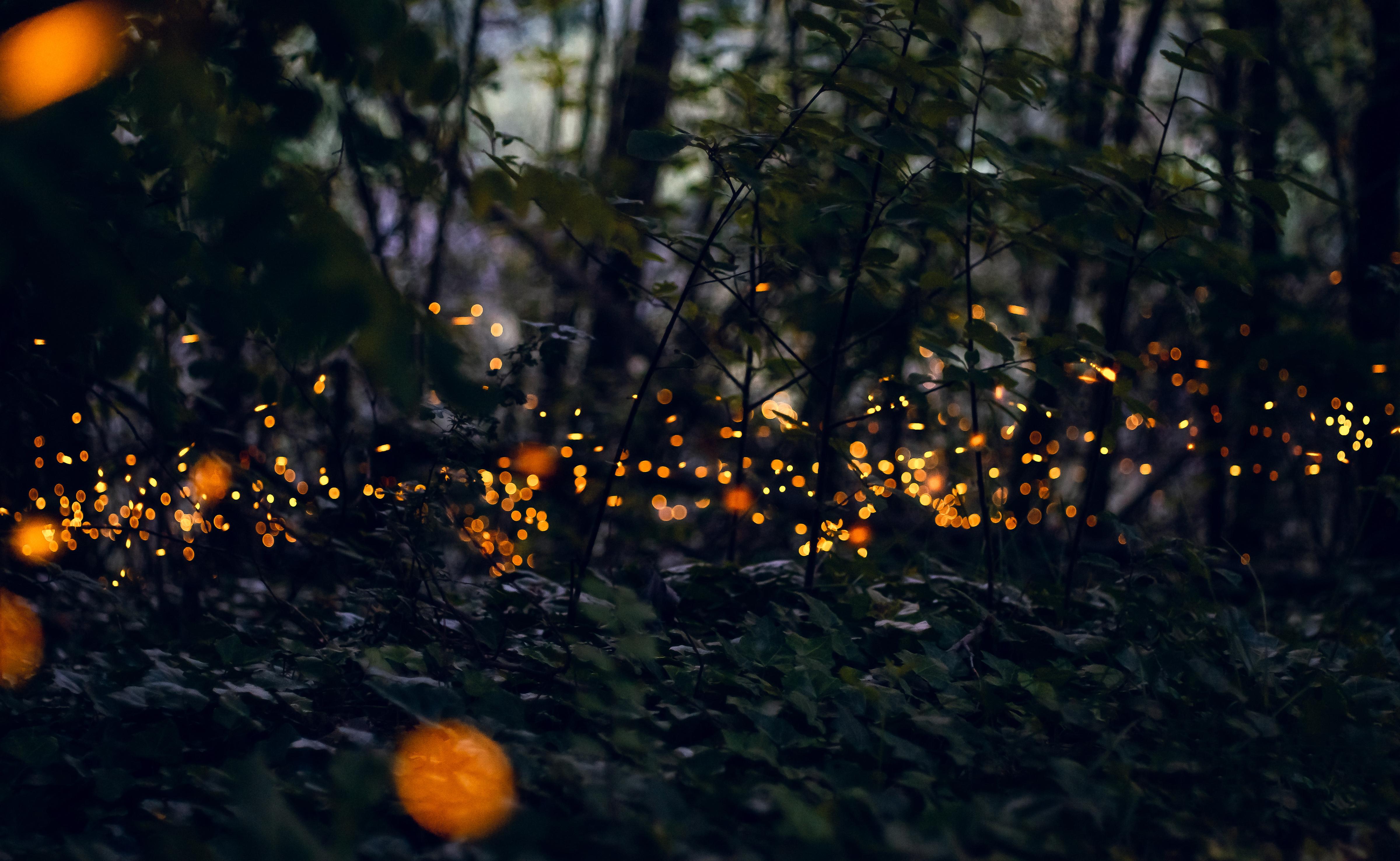 Il parco di Milano in cui si può assistere al magico rito d'amore delle lucciole