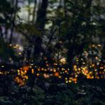 Il parco di Milano in cui si può assistere alla magico rito d'amore delle lucciole