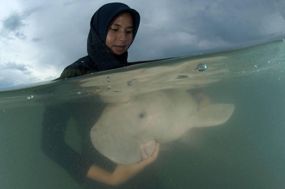 """Mariam, la piccola dugongo che """"abbraccia"""" il suo salvatore fa innamorare il mondo"""