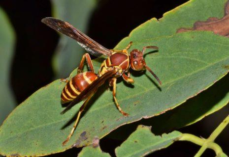 Quali sono le 13 punture di insetto più dolorose e le loro conseguenze