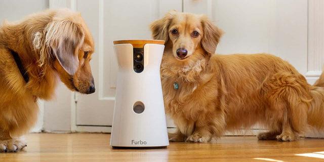 Pet camera: 7 telecamere per dar da mangiare e vedere il tuo animale a distanza