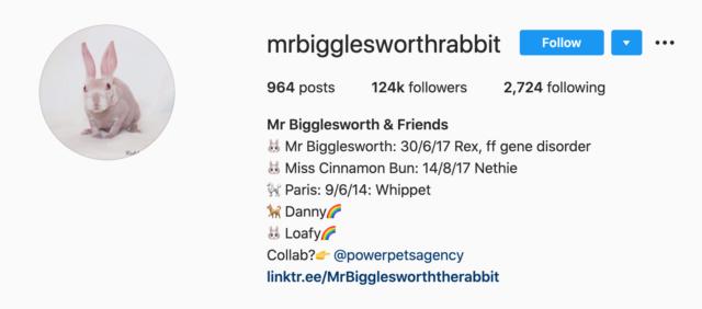 Mr Bigglesworth, il coniglio senza pelo per un difetto genetico diventa una star
