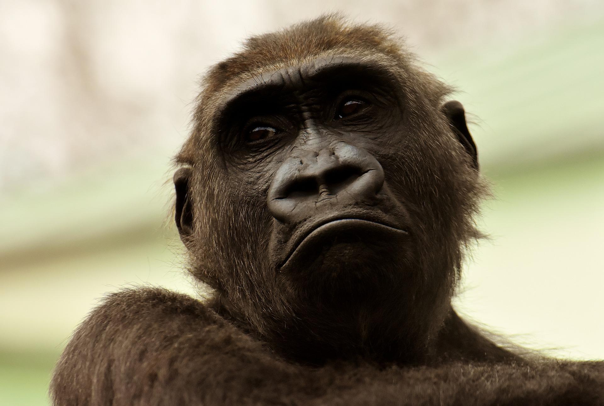 Squali nei rossetti, gorilla nei cellulari: la natura uccisa per i nostri comfort