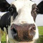 Vorreste adottare una mucca o un albero da frutto? Ecco come fare