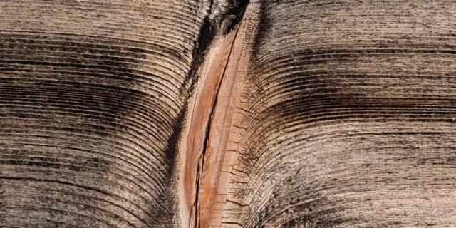 Fighe di legno e uomini autorevoli: due volti della stessa medaglia