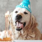 Hai sempre sbagliato a calcolare l'età del tuo cane. Ecco la nuova formula scientifica
