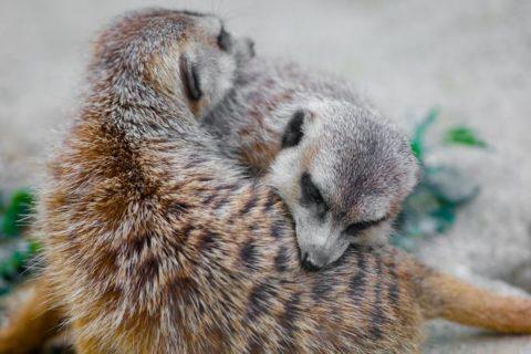 20 immagini che mostrano l'amore tra madre e figlio nel mondo animale