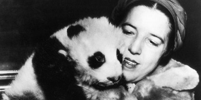 Ruth Harkness, la ragazza con il panda Su Lin, il primo a lasciare la Cina