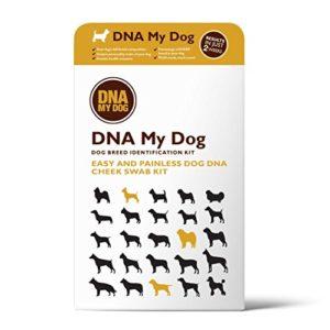 Test per Dna canino Dna My Dog