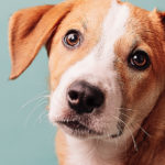 """""""Di che razza è""""?: il test DNA canino rivela tutte le razze del tuo meticcio"""