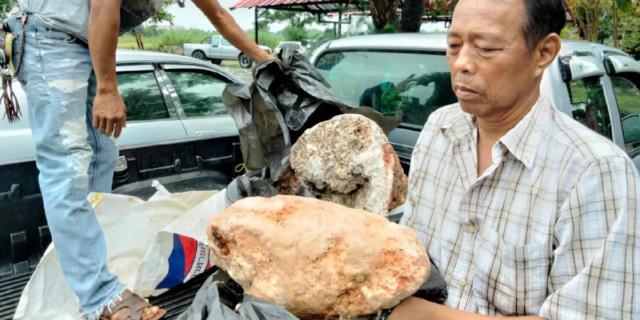 Perché trovare una pietra come questa (che è vomito di balena) vale una fortuna
