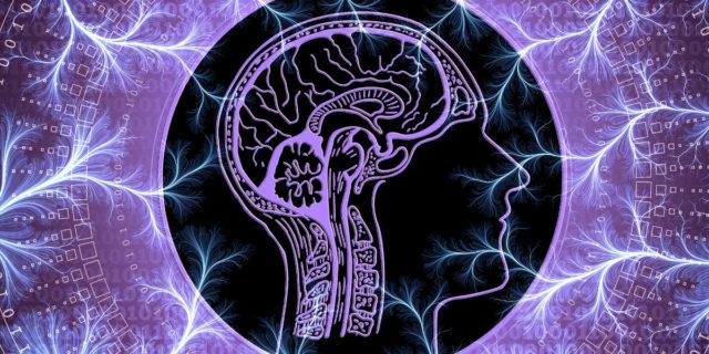 Come allenare la neuroplasticità, la potente capacità del cervello di modificarsi