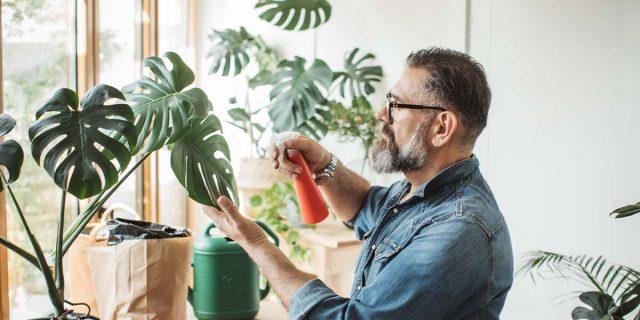 Piante in casa: perché fanno bene e quali sono quelle che purificano l'aria