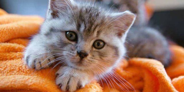 """Cosa significa quando il tuo gatto """"fa la pasta"""""""