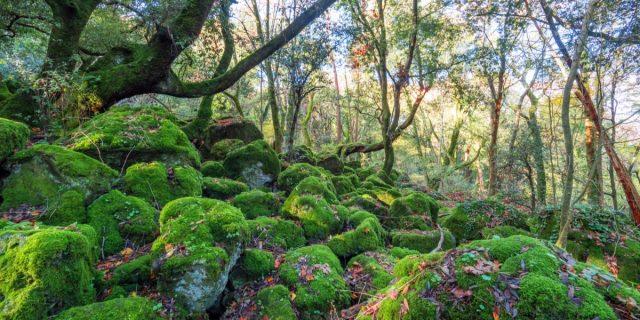 Gli ecovillaggi in Italia e nel mondo: dove sono e i principi che li regolano