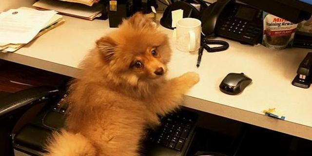 A Genova i dipendenti comunali al lavoro coi propri cani